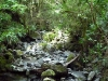 rain_forest_02