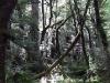 rain_forest_09