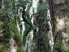 rain_forest_10