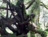 rain_forest_11